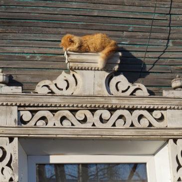 Первый кот qr35.ru